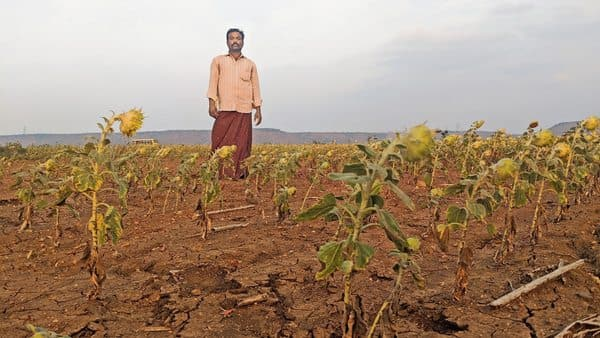 A farmer in Andhra Pradesh's Anantapur shows his drought-hit crop. (Rahul M)