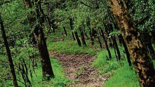 The forest cover as a percentage of the total land area of Kerala has been reduced from 66.2% to 42.15%, during 1973 to 2016, according to 2017 analysis by Mint (Mint)