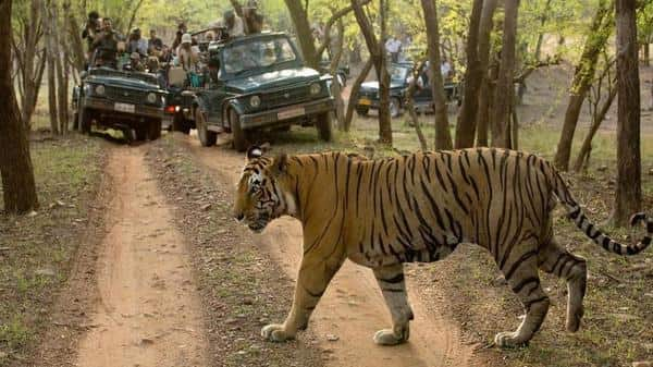 Why India's count of its tigers is crucial ahead of 2022?