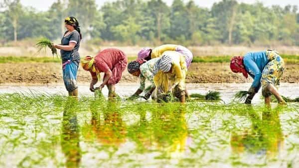 Crop production to be higher than 2018 due to active monsoon: MoS Agriculture