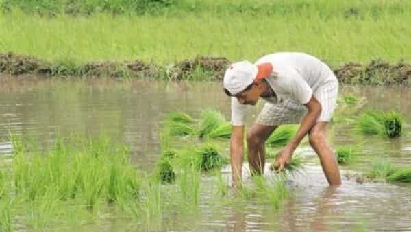 The debt waiver packages, even if limited to a few states, will likely prove to be counter-productive and offer little gains to farmers over the long run. Photo: Mint