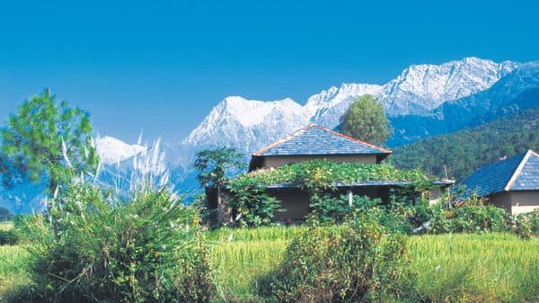 A fine tea from India's hidden hills