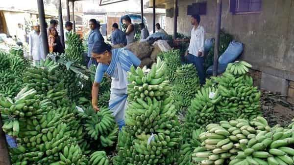 The disruptions in air and shipping logistics have emerged as the biggest challenge to Indian banana exports, say exporters.  (Photo: HT)