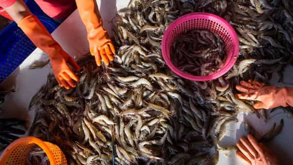 57-year-old Wuhan market shrimp seller may be Covid-19 patient zero: Report