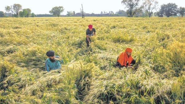 ग्रामीण अर्थव्यवस्था के खतरे से सावधानी बरताने किे लिए राज्य सरकार अधिक उपज की खरीद करती है