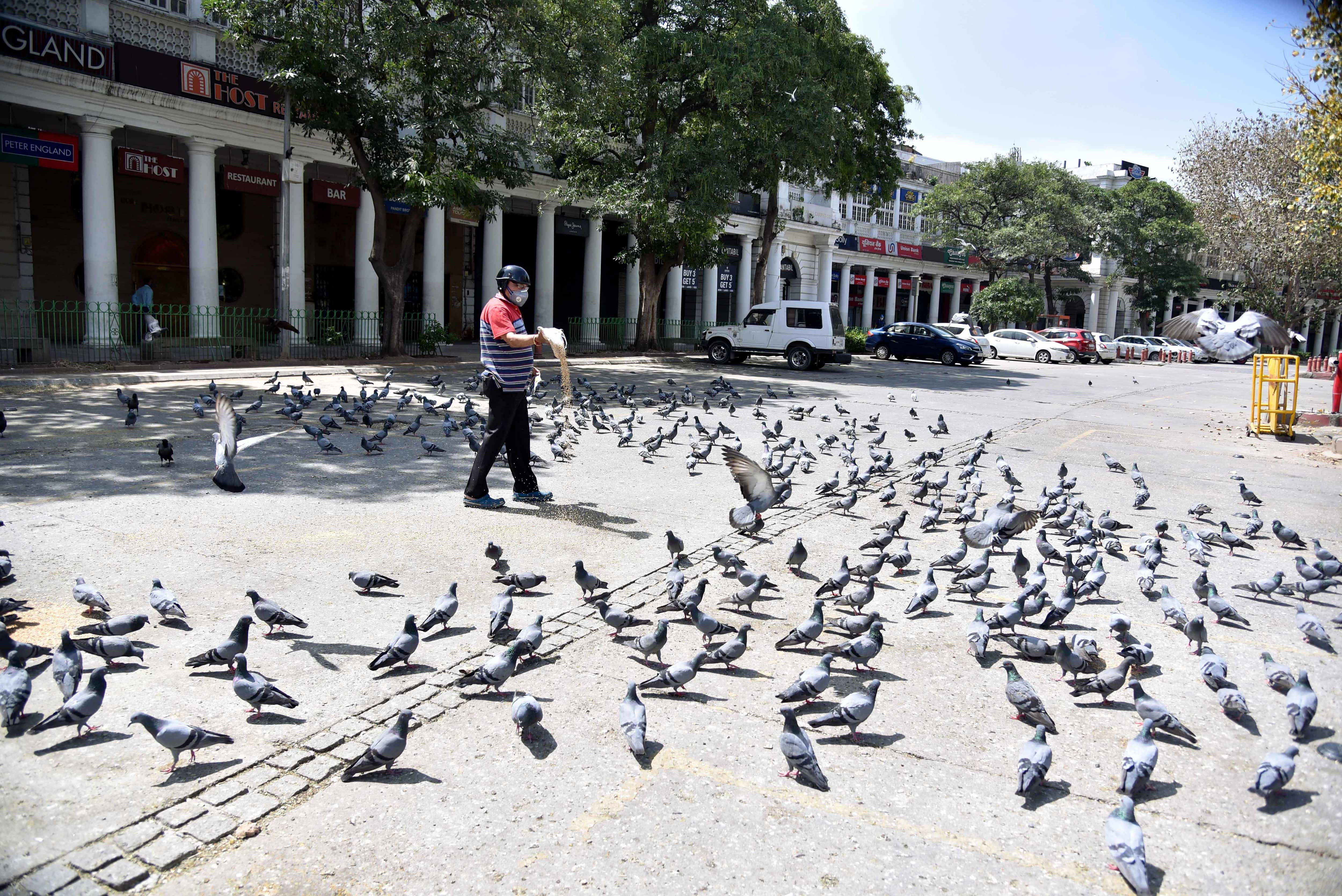 Pigeons are seen at a deserted Connaught Place during a government-imposed lockdown as a preventive measure against the coronavirus in New Delhi on Thursday (Photo: ANI)