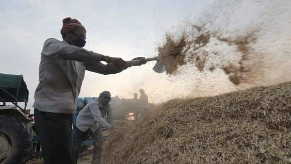 Farmers sort wheat crops after harvesting, during the nationwide lockdown to curb the spread of coronavirus, at Kanachak village in Jammu. (PTI)