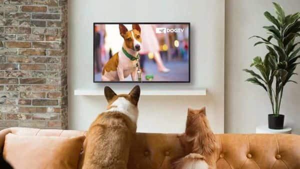 The DogTV channel reaches over 250 million households worldwide.