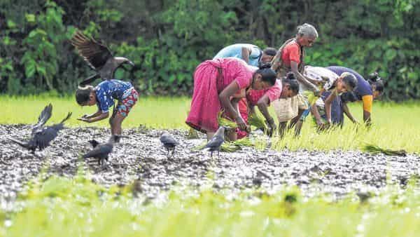 Farmers work closely with DeHaat to get advisory services, and the startup ties up with institutional buyers for procurement (PTI)