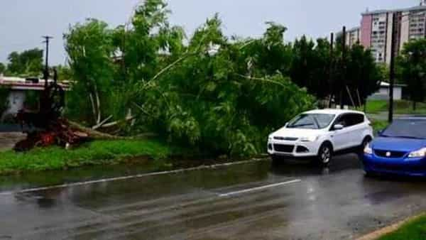 A large tree toppled by tropical storm winds (AP)