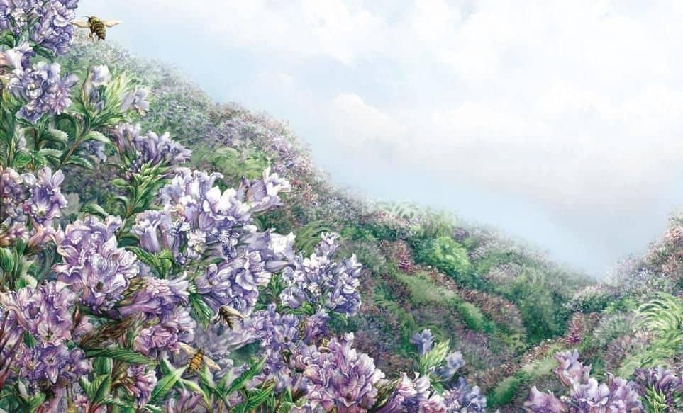 राव का 'नीलकुरिनजी का चित्र' वह कहती है कि यह शोला के जंगलों में पाया जाने वाला एक झाड़ी है और एक बार इसके फूलों के मौसम के दौरान अनामलाई हिल्स, इलायची हिल्स और नीलगिरी हिल्स को कवर करता है। अब मानव आवास अपने निवास स्थान पर कब्जा कर लेते हैं। जब झाड़ियां फूल जाती हैं, तो वे ऐसा एकतरफा करते हैं, नीले रंग के कालीनों में पूरी पहाड़ियों को कवर करते हैं। लेकिन यह तमाशा 12 साल में एक बार ही होता है।