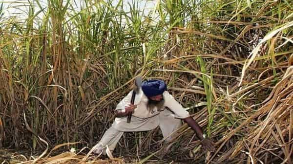 Hike in ethanol prices will be positive for sugar industry: Icra