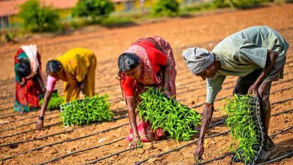Bengaluru-based YCook supplies free saplings to farmers to grow what goes into the startup's steamed snacks.