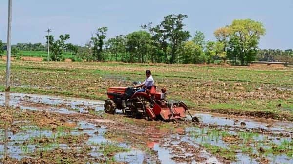 In the hinterlands, the impact of COVID-19 has not been as severe as in the big cities and farmers have benefited from good rainfall.