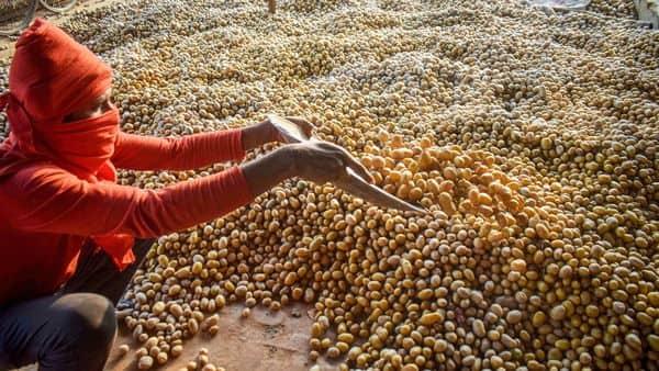 Prayragraj: A vendor sorts potatoes, at wholesale fruit and vegetable market in Prayagraj, Tuesday, Oct. 27, 2020. (PTI Photo) (PTI27-10-2020_000043B) (PTI)