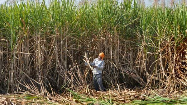 Under the PM-KISAN, an income support of  ₹6,000 per year is provided to all registered farmers across the country (PTI)