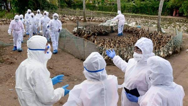 A team of health experts, from the Union Ministry of Health and Family Welfare, led by Dr Ruchi Jain visit a bird flu-affected area at Karuvatta in Alappuzha district. (PTI)