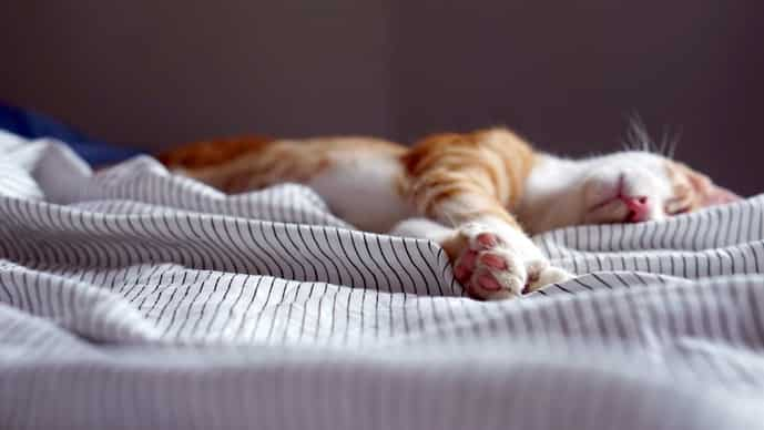 Napping seems to be associated with better locational awareness, verbal fluency, and working memory (Photo: Unsplash)