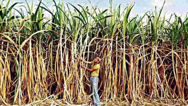 The government has been pushing for ethanol production with surplus sugar production depressing sugar prices and consequently increasing the dues of sugarcane farmers