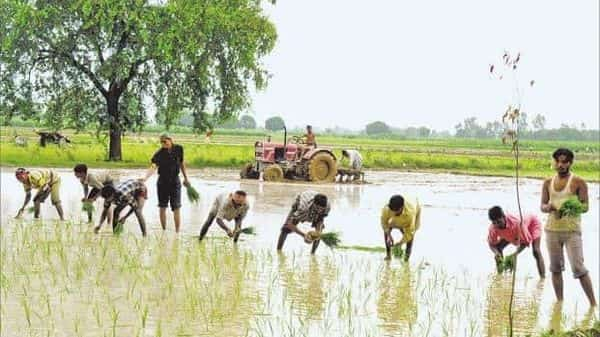 Indian farmers are purchasing a record number of tractors, and adopting improved methods like drip and sprinklers for irrigating their fields, Modi said. Photo: HT