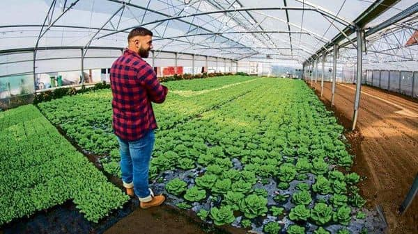 Despite the many benefits of hydroponics, one thing that hampers its growth is capital cost. Setting up a three-acre farm, for instance, could add up to a couple of crores. (Photo: iStock)