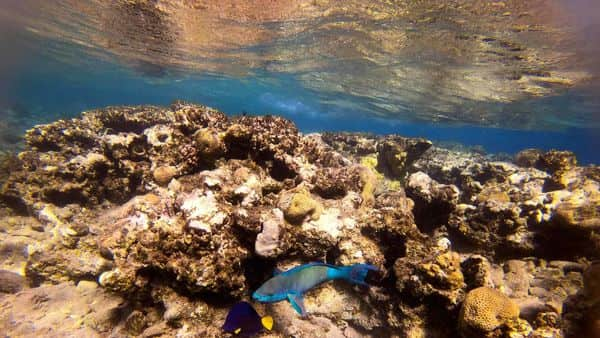 This picture taken on February 10, 2021 shows a view of marine life at a coral reef in the Red Sea waters off the coast of Israel's southern port city of Eilat. - Israeli environmentalists are warning that the UAE-Israeli deal to bring Emirati crude oil by tanker to a pipeline in Eilat threatens unique Red Sea coral reefs and could lead to