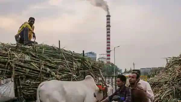 A worker transports sugarcane on a bullock cart to a sugar factory in the Jalana district of Maharashtra, India, (Bloomberg)