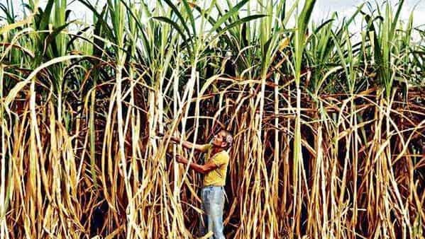 Praj will expand the existing ethanol manufacturing capacity to 600 kilo liters per day using sugarcane syrup.