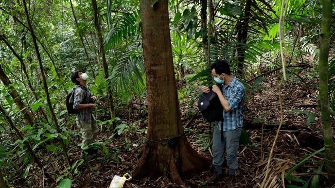 Biologists Claudio Monteza (right) and Pedro Castillo install a remote camera trap on a tree in the rainforest in San Lorenzo, Panama.
