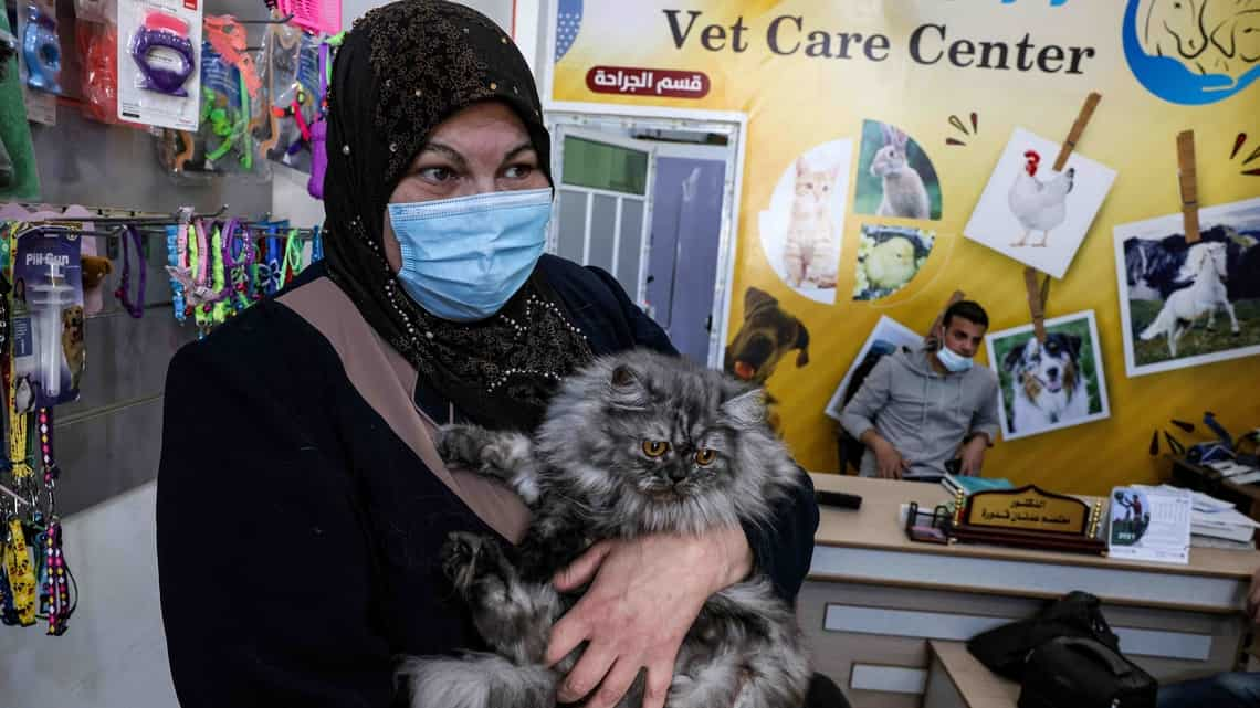 Palestinian cat owner Amani Abu Shaaban holds her feline companion at a veterinary clinic in Gaza City. Photo: Mohammed Abed/AFP