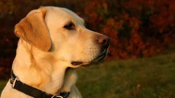 The CDC has previously estimated 1.06 million dogs are imported into the United States annually. (HT)