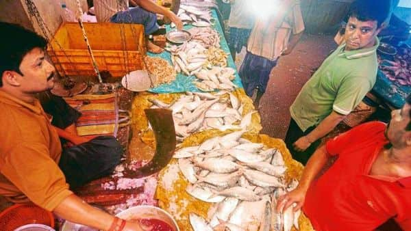 The early signs of the hilsa catch are encouraging though the numbers are very small.