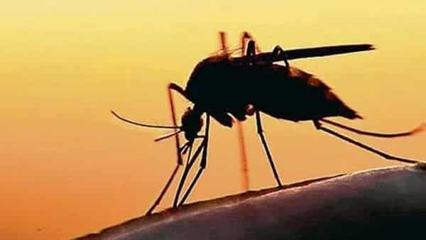 Zika virus cases have gone up to 61 in Kerala.