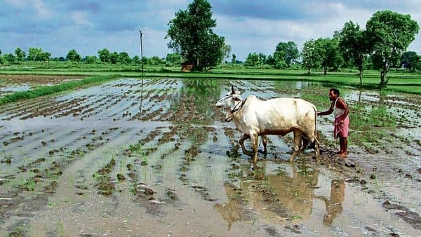 In the past fortnight, monsoon rains increased significantly with precipitation in September 53% above normal so far. Reuters