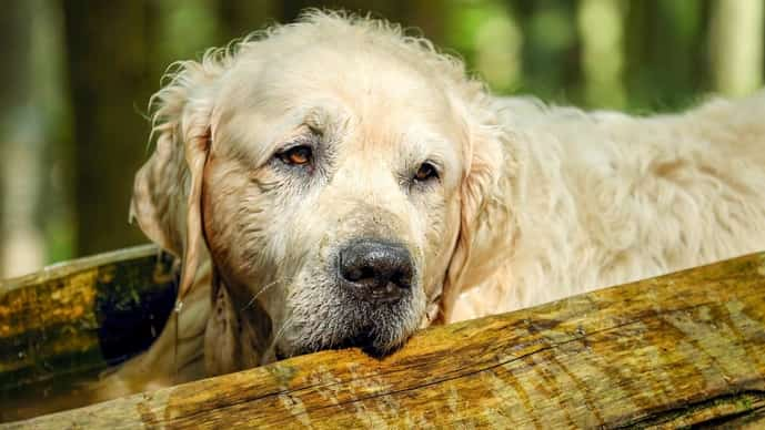 While there is enough research to suggest that dogs can also suffer from this illness, it often goes undiagnosed. Photo: Couleur on Pixabay