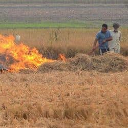 Delhi to start spraying Pusa bio-decomposer from 5 October to prevent stubble burning: Minister