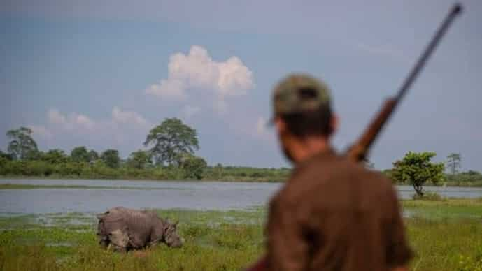 A forest guard stands by a one-horned rhinoceros grazing in the Kaziranga national park on the eve of the World Rhino Day in Gauhati, India, (AP Photo/Anupam Nath)