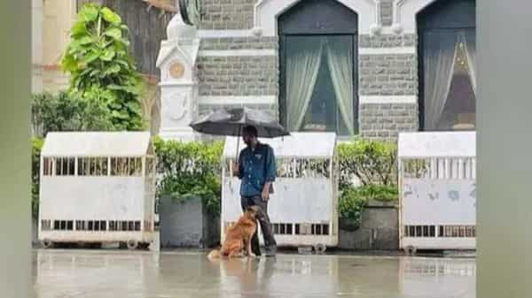 Taj employee shares umbrella with stray dog