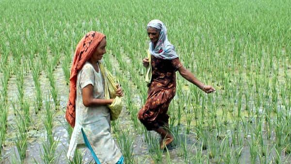 Fertilizer subsidy is given through manufacturers rather than directly to the consumer,