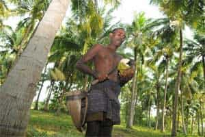 Past, Present, Future | The coconut tree climber