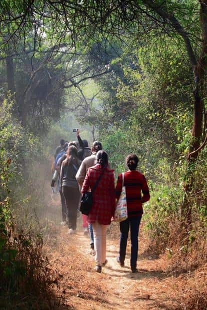 A curated walk to understand long-term rewilding measures in Delhi's Central Ridge area. Photo: Vijay Dhasmana