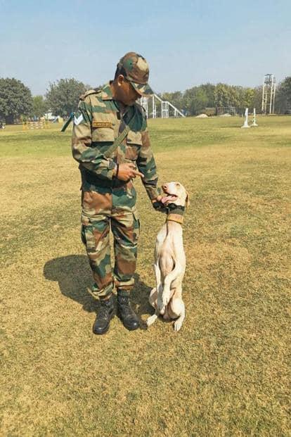 Tarak with his handler at the RVC, Meerut. Photo: Sunaina Kumar