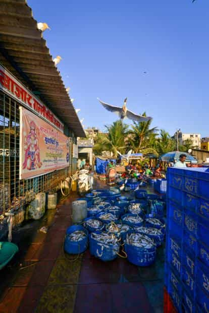 The Versova fishing jetty in Mumbai