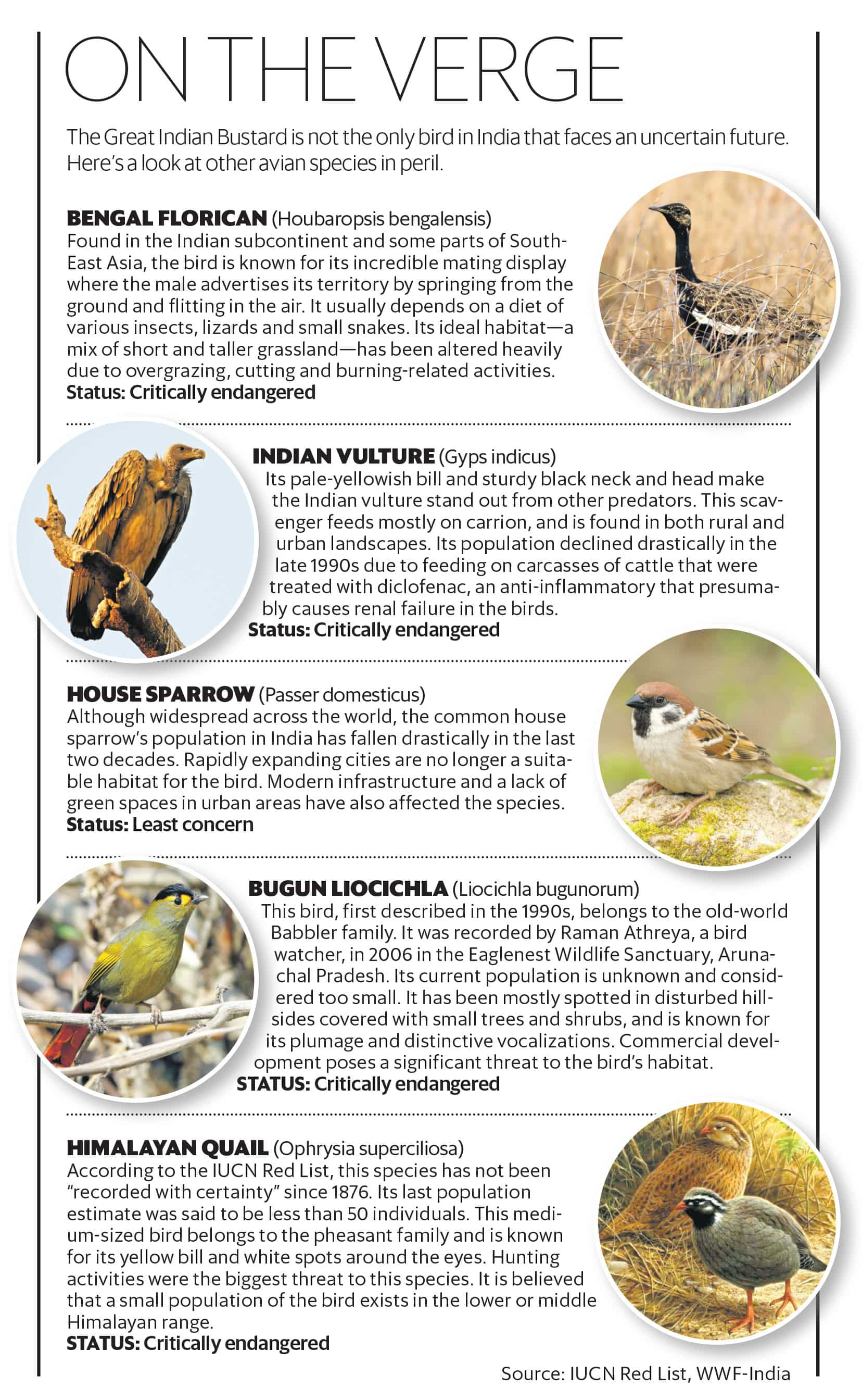 The Great Indian Bustard's last sigh