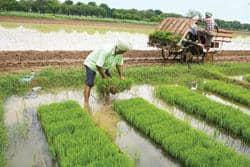 Short of hands: Paddy transplanting season is in progress in the Chandigarh-Ludhiana belt in Punjab (Photo by:  Madhu Kapparath/Mint )