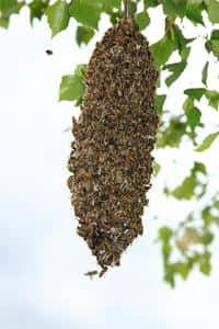 Let 'em bee: They're a beneficial species.