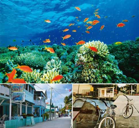 Big blue: (clockwise from top) The colours of the coral reef off Belize (Thinkstock); bicycles parked near the docks; and a street in town. Photographs by Jayati Vora