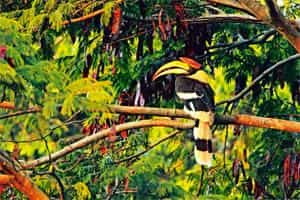 Birding trail: The Great Indian Hornbill resting on a tree branch in a forest . Photo: Ramki Sreenivasan/Conservation India