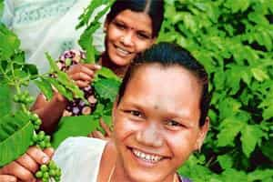 Family matter: Men and women are equally engaged in this horticultural revolution; and (right) Araku's Forest Trail costs Rs 360 for 200g.