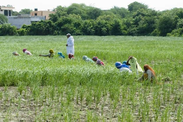 how to improve agriculture in india